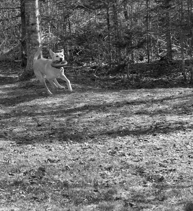 photoblog image Frisbee time